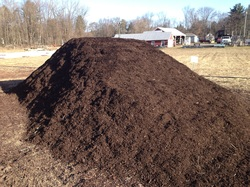 Walnut Mulch